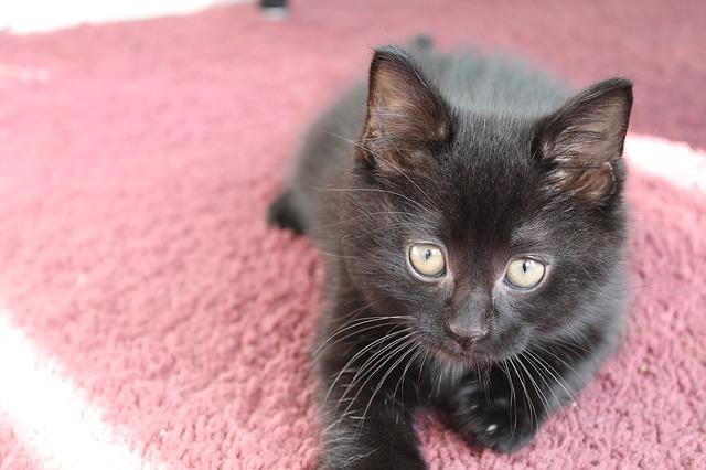 kitten-447802_640